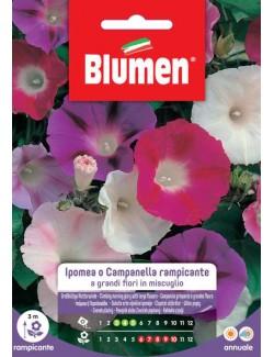 Ipomea Campanella Rampicante in Miscuglio - Blumen