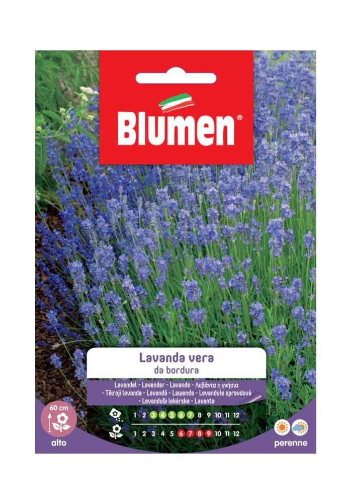 Lavanda Vera da Bordura - Blumen