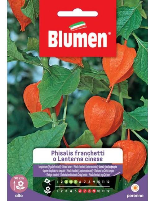 Physalis franchetti o Lanterna cinese - Blumen