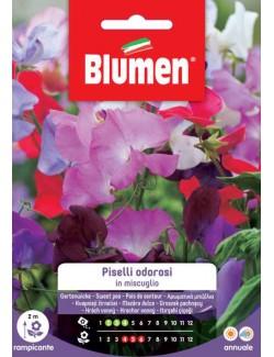 Piselli Odorosi in Miscuglio - Blumen