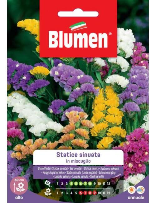 Statice Sinuata in miscuglio - Blumen
