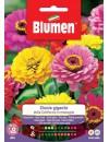 Zinnia gigante della California in miscuglio - Blumen