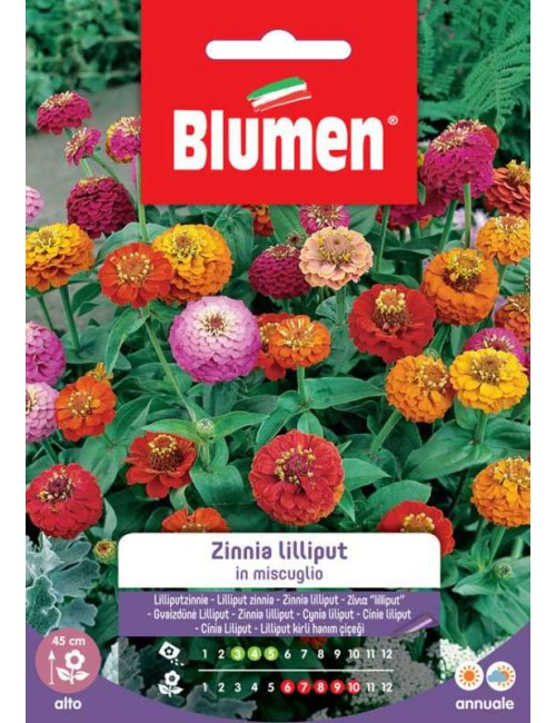 Zinnia Lilliput in miscuglio - Blumen