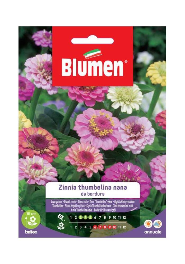 Zinnia Thumbelina nana da bordura in miscuglio - Blumen