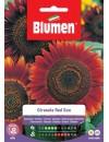 Girasole Red Sun - Blumen