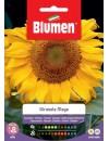 Girasole Maya - Blumen