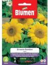 Girasole Bambino - Blumen
