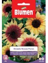 Girasole Annuus Floren - Blumen