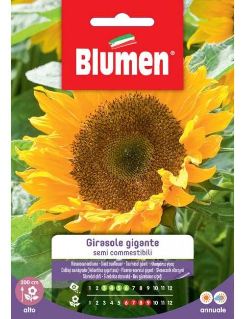 Girasole gigante semi commestibili - Blumen