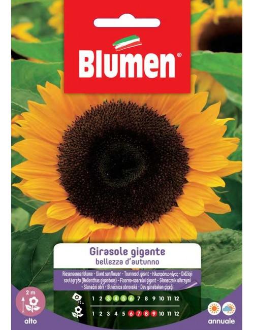 Girasole gigante Bellezza d'autunno - Blumen