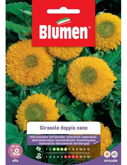 Girasole doppio nano giallo - Blumen
