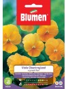 Viola Chantreyland a grandi fiori - Blumen