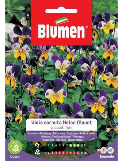 Viola cornuta Helen Mount a piccoli fiori - Blumen