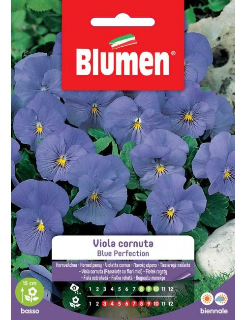 Viola cornuta Blue Perfection - Blumen
