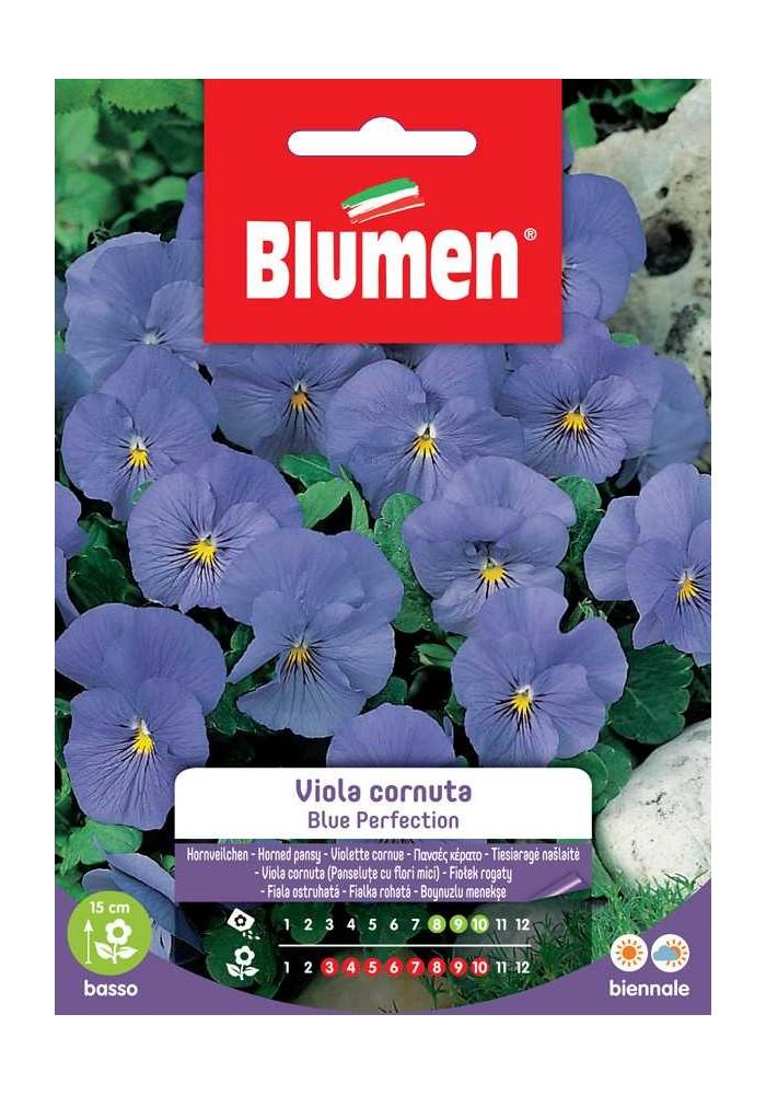 Viola cornuta Blue Perfection - Blumen