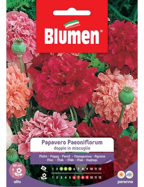 Papavero Paeoniflorum doppio in mix - Blumen
