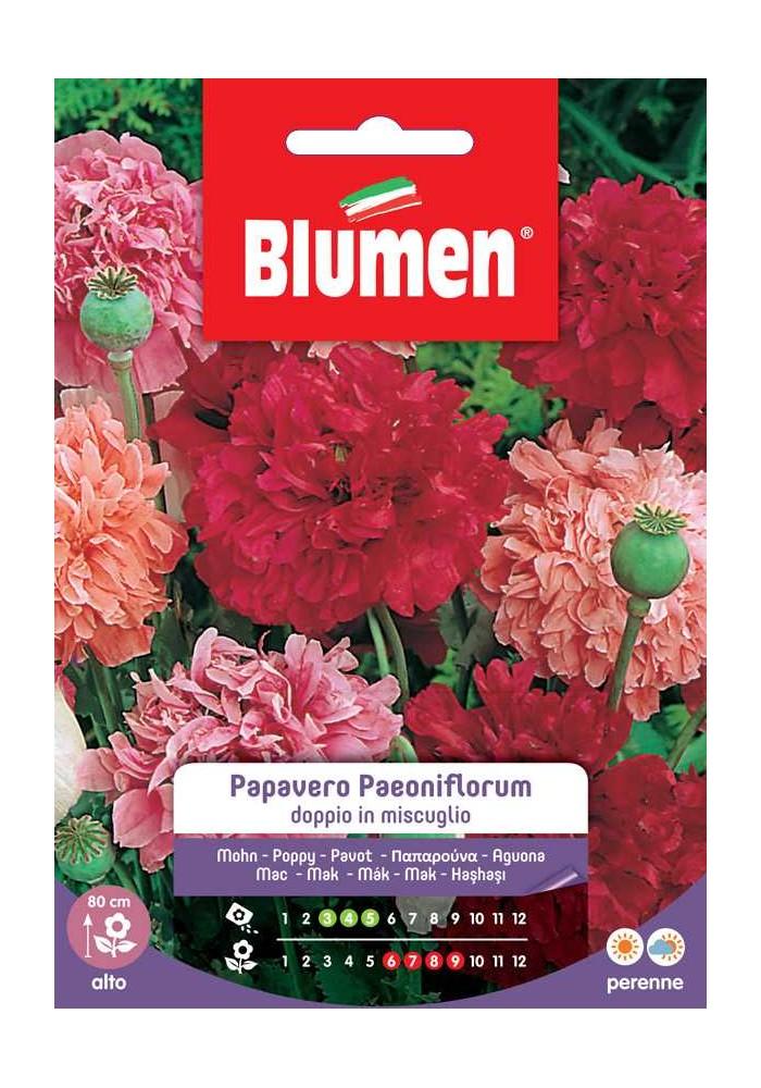Papavero Paeoniflorum doppio in mix - Blumen