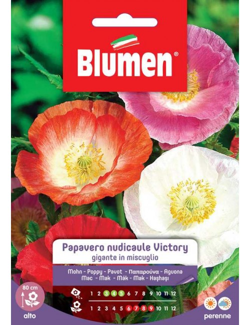 Papavero nudicaule Victory gigante in mix - Blumen