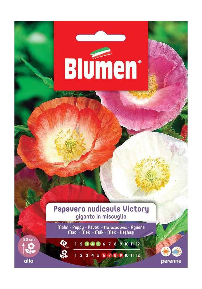 Papavero nudicaule Victory gigante in mix - Blumen