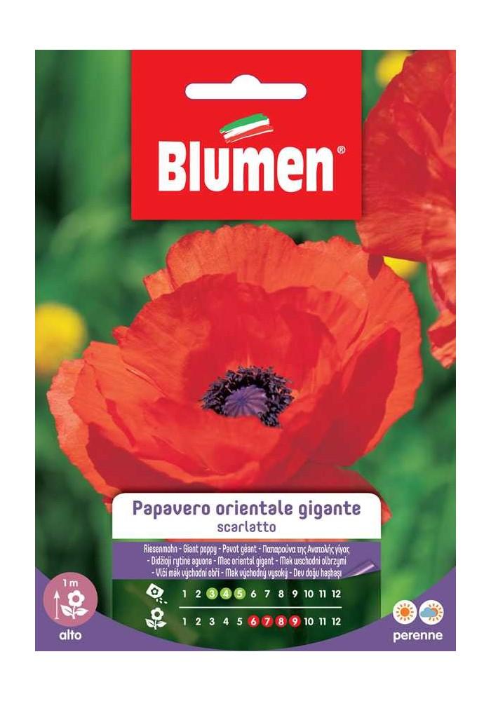 Papavero orientale gigante scarlatto - Blumen